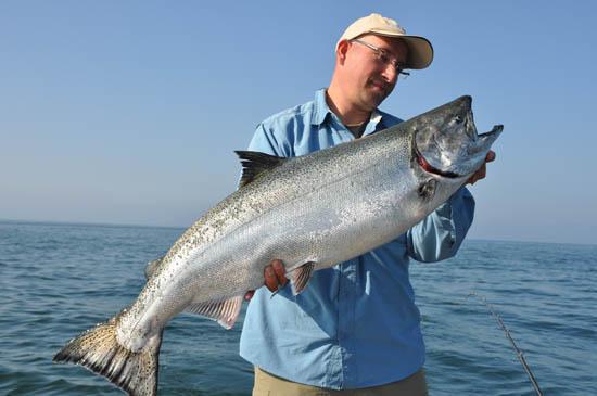 King Salmon Chinook Dutchanglers