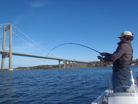 Bootvissen Denemarken