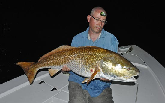 Giant Red Drum female