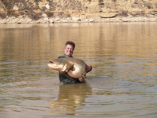 De laatste visdag in Caspe blijkt deze dikke 187 er verantwoordelijk voor een gierende run op de karperhengel, na 45 minuten drillen met een 3 ponds Sportex gaf de vis zich gewonnen.