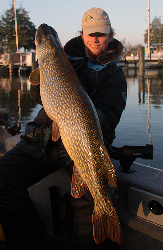 Havenvissen blijft een successtory, deze 120er trok 15,5kg van de unster