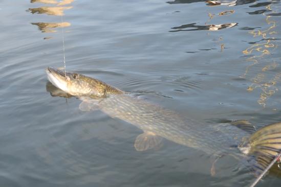 De eerste meter hangt in het water