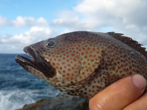 Lipstick grouper?