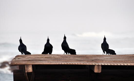 Ochtendgymnastiek voor vogels