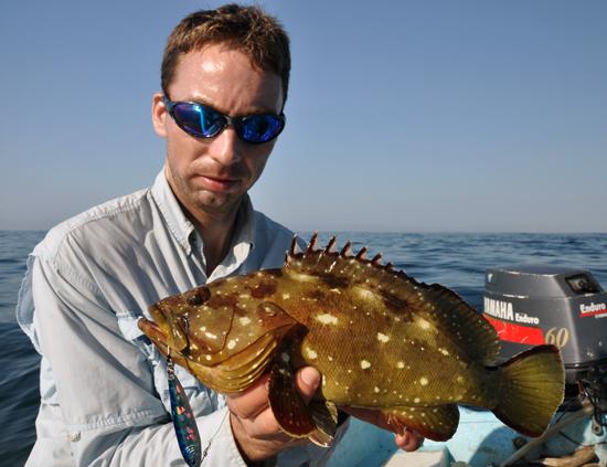 Starry Grouper voor André