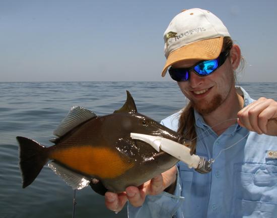 Nieuwe salt shaker -> triggerfish -> einde salt shaker...