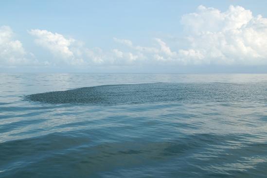 Scholen sardines zwemmen verspreid rond. Goed voor aasvis en voor roofvis die eromheen zwemt.