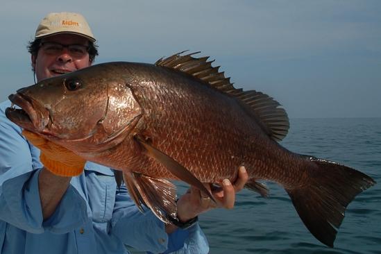 Wat een geweldige vis en vechtmachine, super!