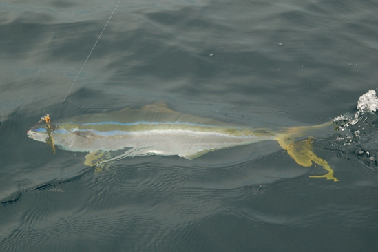 Rainbow runner, kleurenspel