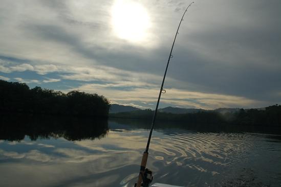 Trollen in het ochtendlicht op Sierpe river