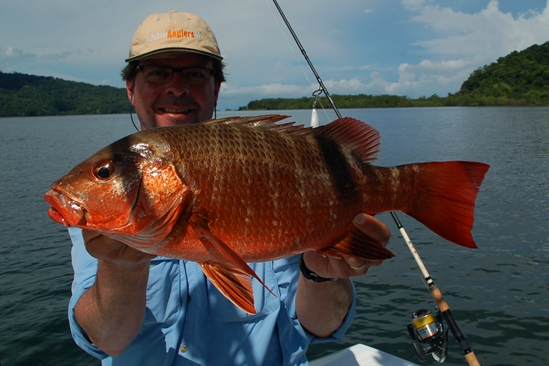 Superfraaie mangrove snapper