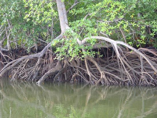 Bij laag water zijn de vissen tussen de takken vandaan en kun je ze beter vangen