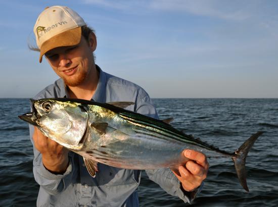 1 Worp, 1 vis: Black Skipjack Tuna