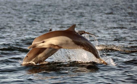 De mooiste van de dolfijnensoorten