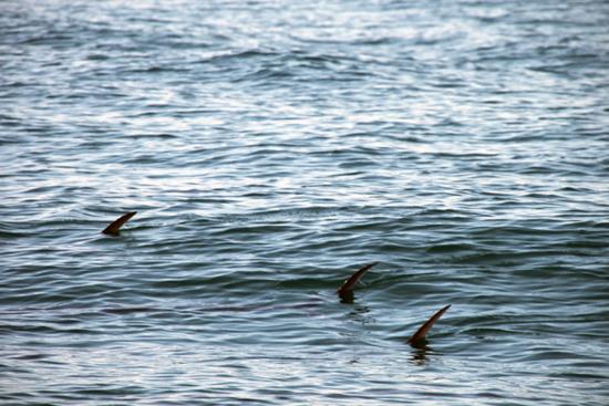 Drie vissen maken zich los uit de school...
