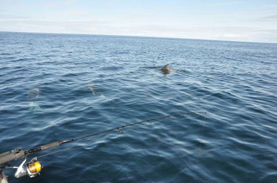 dolfijnen om de boot