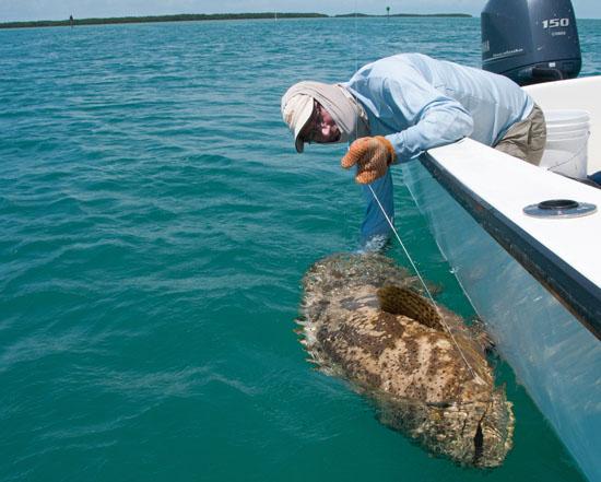 Dit Is Rog Het Is Geen Vis Ze Is Een Boot Met Een Naam Is Dat Gek ...: pinstake.com/dit-is-rog-het-is-geen-vis-ze-is-een-boot-met-een-naam...