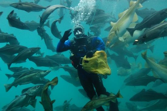 Het aquarium is een leuke attractie met prachtige exposities