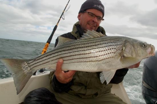 Striped bass in Montauk, USA. Een trip waar de wind in de weg zat maar we ze toch wisten te vangen. Nu nog terug voor de echt grote!