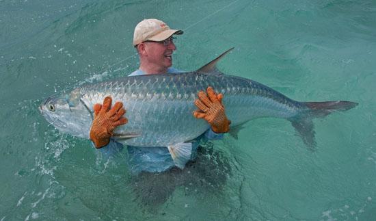 Florida tarpon vissen
