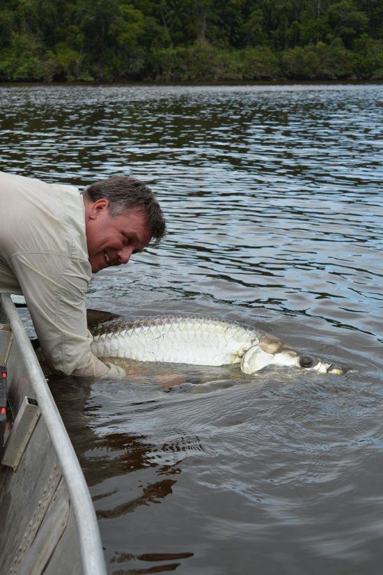 Vissen in Suriname op Piraiba en Tarpon   The Dutchanglers  Tarpon