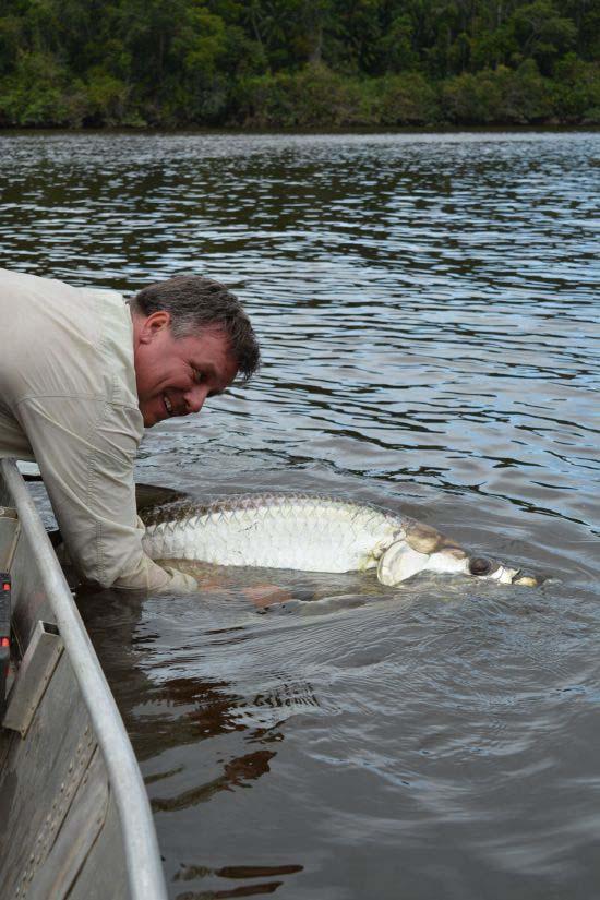 Vakantie in Suriname – de eerste grote vis is tot verrassing tarpon