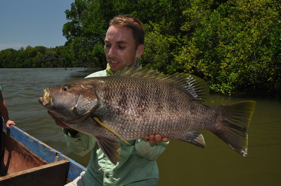 Ongelooflijk dat deze vissen zelfs met 150grams hengels soms niet af stoppen waren…De Mike Tyson onder de baarzen!