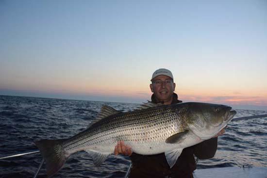 Striped Bass Montauk Jeff Nichols