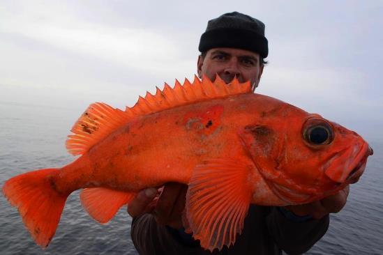 En de bonusvis die ik op dit formaat nog niet had, wat een plaatje!