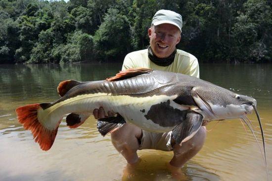 Roodstaartmeerval, wat een fraaie vissen