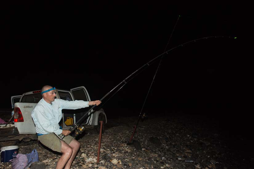 dril strand haai
