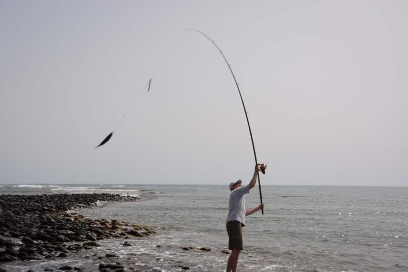 strandhengel haai Maio