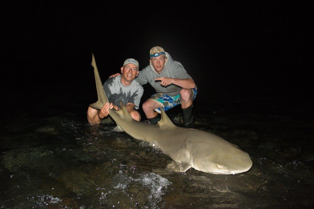 Lemon Shark Cabo Verde