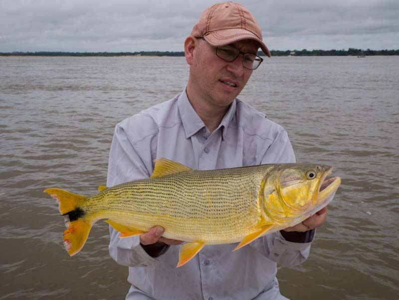Golden Dorado parana river