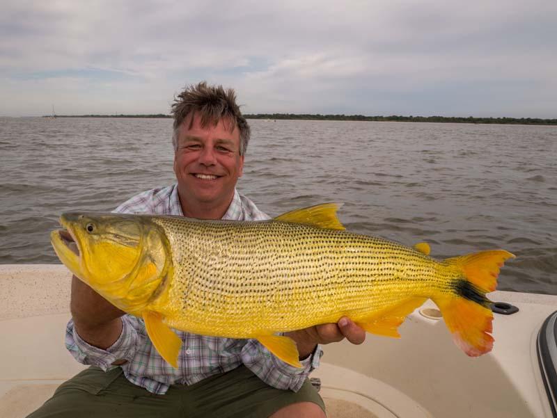 Golden dorado angler