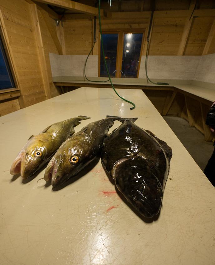 Vis meenemen Loppa