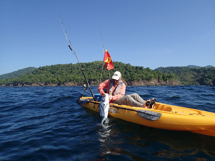 Roosterfish release Panama